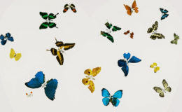 Damien Hirst's Latest Huge Print Brings Love To Our Gallery
