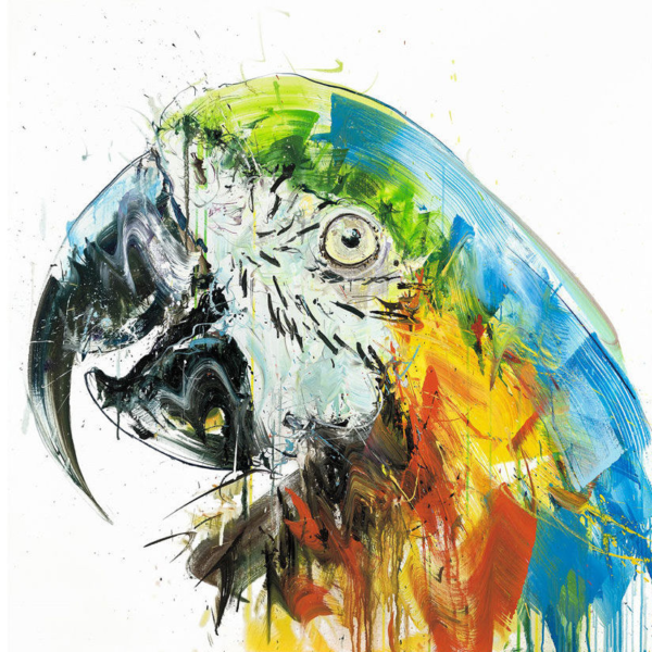 Dave White parrot II